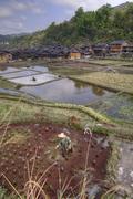 Peasant working in rice paddies  near chinese ethnic minorities village. - stock photo