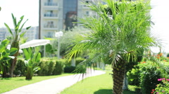 The Courtyard With Palm Trees and walkway footpath in garden. Stock Footage