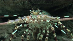 Crayfish And Marine Animals Stock Footage