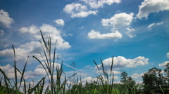 Sunny summer meadow moving clouds timelapse Stock Footage