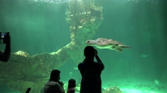 Tourists And Photographers At Aquarium - stock footage