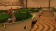 Rainbow trout hatchery. Stock Footage
