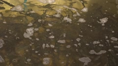 Trout fingerlings in the tank for transportation. Stock Footage