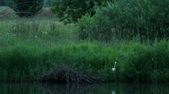 White Bird at The River Stock Footage