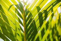 Natural background with palm tree leaves and sun reflection. Stock Photos
