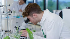 4K Biology research scientist working in lab & analyzing plant samples - stock footage