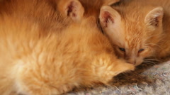 Cute Sleepy Orange Kitten Stock Footage