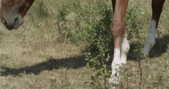 Horse grazing feeding eating grass Stock Footage