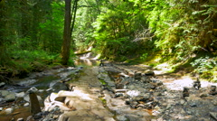4K Gentle Creek Trickles through Mountain Forest Landscape, Moss and Ferns Stock Footage