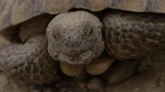 Blinking eyes Tortoise Stock Footage