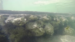 The underwater world in a small river.  Fish. Reflection of water Stock Footage