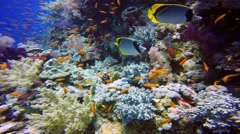 Gorgeous colorful coral reef. Stock Footage