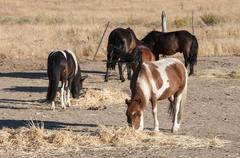Herd of horses feeding in the riding horse Stock Photos