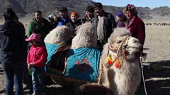 BACTRIAN CAMEL MONGOLIA KAZAKHSTAN Stock Footage