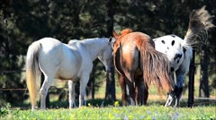 Horses tails swishing Stock Footage