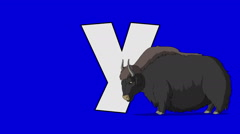 Letter Y  and  Yak  (foreground) - stock footage