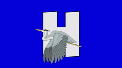 Letter H and Heron (foreground) Stock Footage