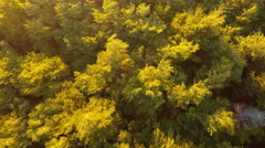 Aerial: Forrest Trees Blowing In Wind Pan Up To Volcano At Sunset 2K Stock Footage