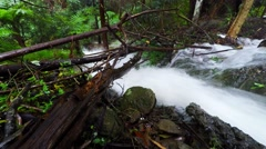 Fast Moving Storm Water Powering Through the Bush Australia  Stock Footage