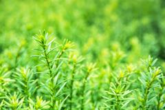 Detailed photo of vivid green plant, natural scene Stock Photos