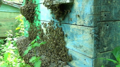 Many bees to gather around the entrance hive. Stock Footage