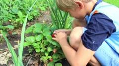 Child eating fresh garden berries Stock Footage