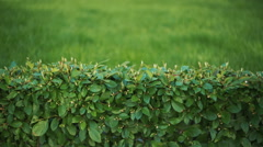 Background- Wall of green plants Stock Footage