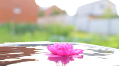 Beautiful human hands carefully holding flowers floating in the pool. - stock footage