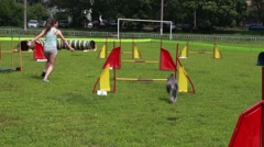 KHARKIV, UKRAINE, open dog agility tournament - stock footage