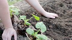 Women Planting Squash Plants in Garden Stock Footage