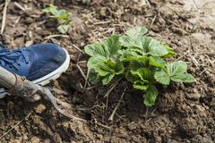 Digging spring soil with pitchfork Stock Photos