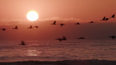 Birds flying in slow motion at sunset over the sea - stock footage