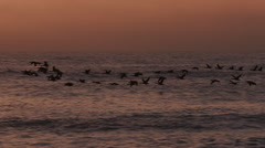 Birds flying in slow motion at sunset over the sea Stock Footage