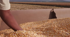 4K view of farmer scooping up harvested corn Stock Footage