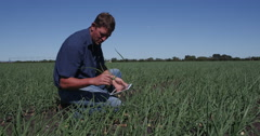4K Agronomist/farmer inspecting field of onion plants using a tablet Stock Footage