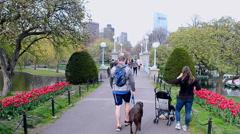 Boston Public Garden in Boston, Massachusetts, USA. Stock Footage