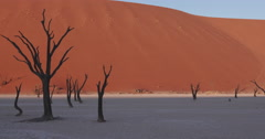 4K panning shot of dead trees in Dead vlei inside the Namib-Naukluft National Stock Footage
