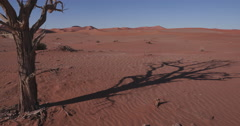 4K time lapse of tree shadow moving over sand dunes inside the Namib-Naukluft Stock Footage