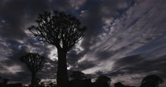 4K time lapse of clouds moving with quiver tree in silhouette Stock Footage