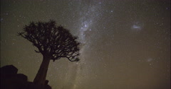 4K time lapse of stars moving and quiver tree in silhouette Stock Footage