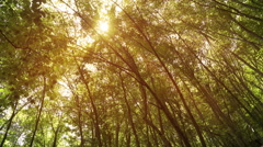 Crowns of trees with bright afternoon sun and rays Stock Footage