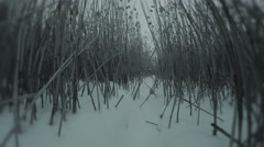 Crawling through dead reeds in the darkness of winter in the snow. - stock footage