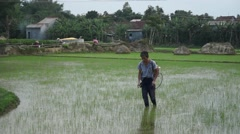 Unidentified Vietnamese farmer walking through rice field, spraying pesticides. Stock Footage