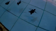 In and Out of the Water with Baby Seat Turtles at the Balinese Sea Turtle Con Stock Footage