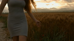 Woman's hand touch wheat ears at sunset,summer concept freedom wealth Stock Footage