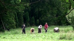 Cultivating their land in Bucharest - stock footage