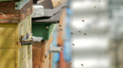 Bee hive in the springtime Stock Footage