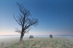 Misty morning on marsh with dry tree Stock Photos