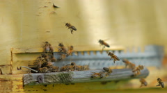 Bees at entrance of beehive Stock Footage