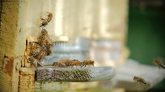 Bee flying in front of a beehive Stock Footage